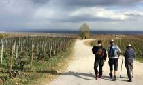 Hike & wine tour from Naoussa - Thessaloniki